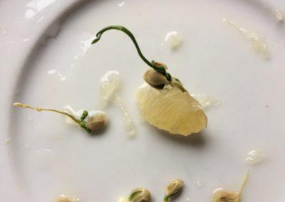 citroenpitten-opkweken-sept-2019 (4)